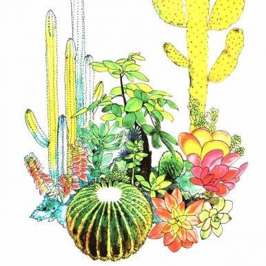 Cacti By Andrew MacGregor