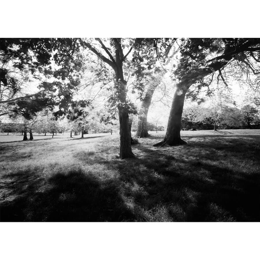 David Whyte Brockwell view - Brockwell Park View by David Whyte