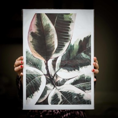 Ficus Elastica Variegata By Paulina Kwietniewska