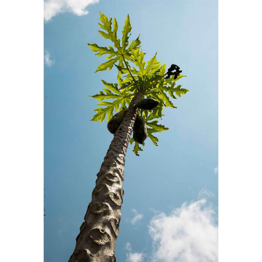 Michelle Levie Burnin Ground papaya full - Burning Ground, Papaya by Michelle Levie