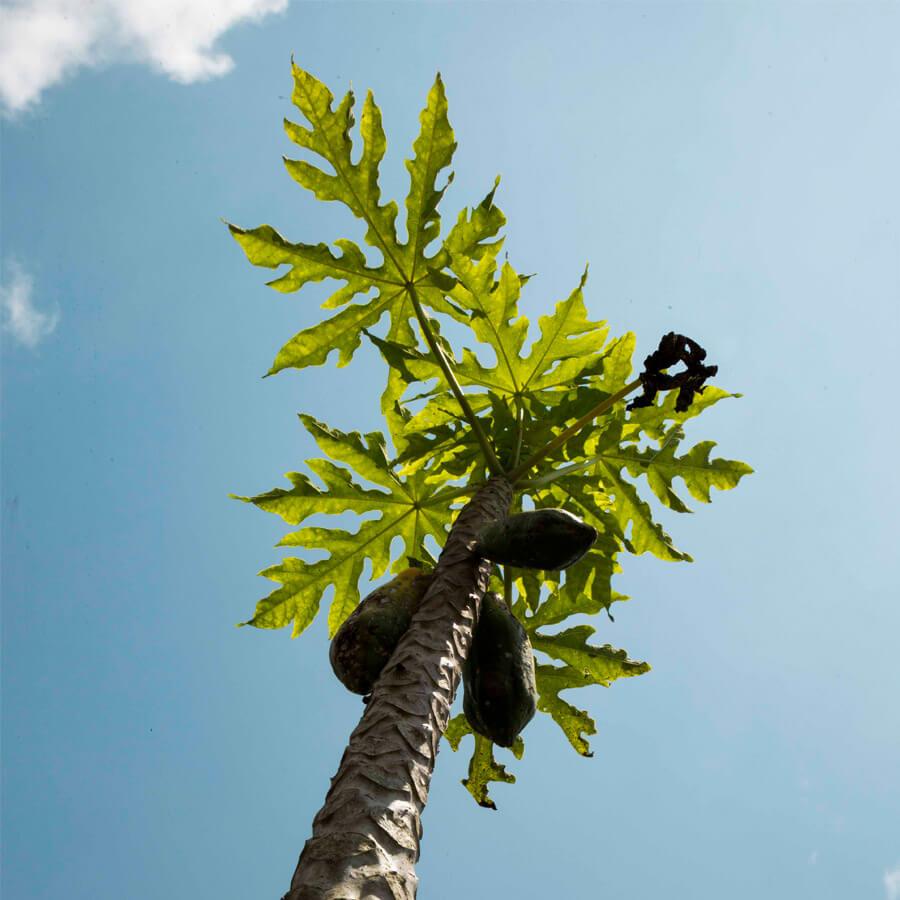 Michelle Levie Burnin Ground papaya - Burning Ground, Papaya by Michelle Levie