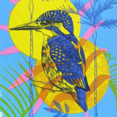 Melissa North Kingfisher crop 386x386 - Melissa North