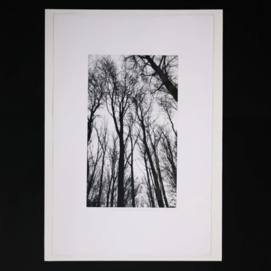 Chorus Of The Trees In Black And White III By Clare Grossman