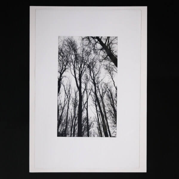 N58A3005 600x600 - Chorus of the Trees in Black and White III by Clare Grossman