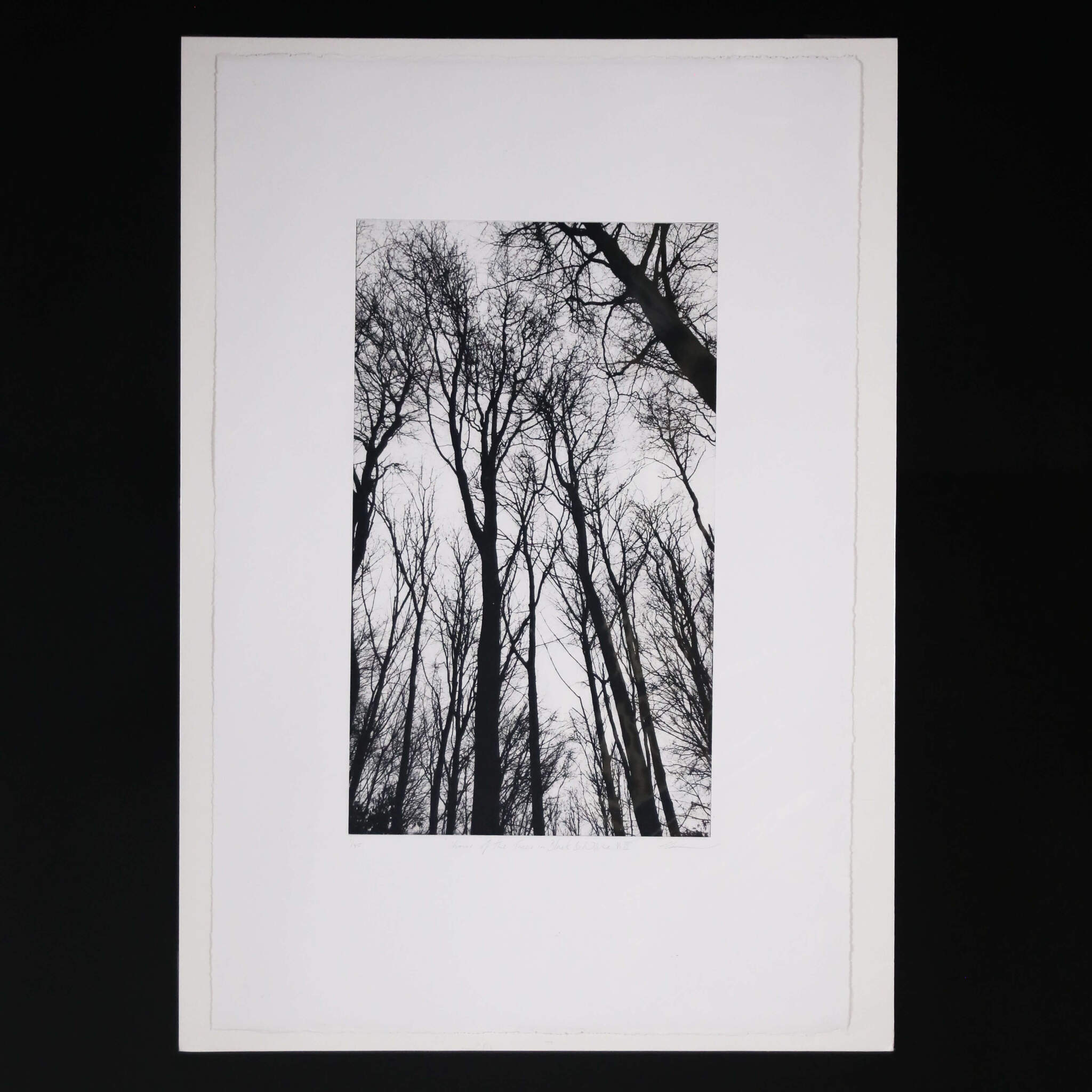 N58A3005 - Chorus of the Trees in Black and White III by Clare Grossman