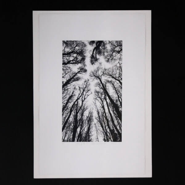 N58A3006 600x600 - Chorus of the Trees in Black and White II by Clare Grossman