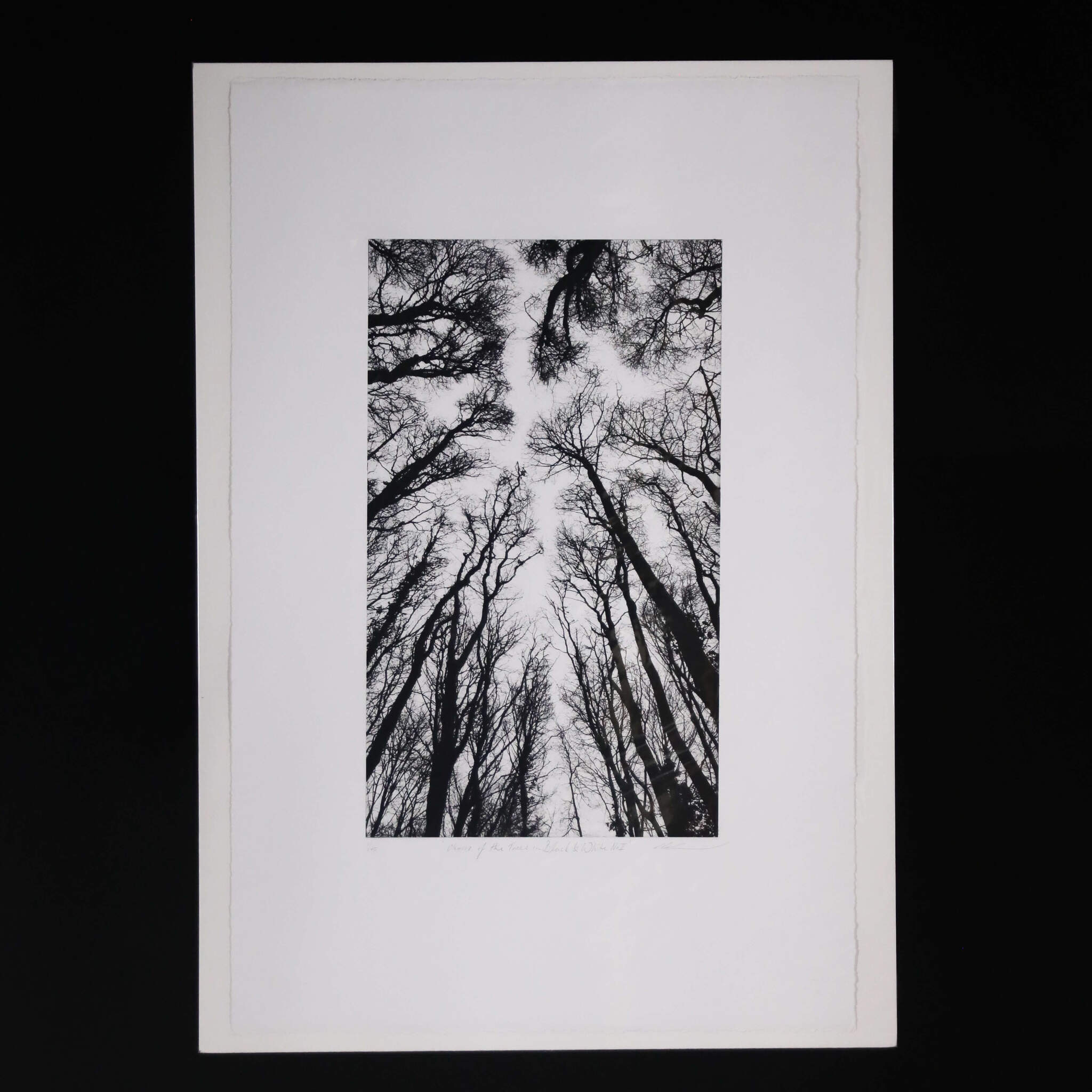 N58A3006 - Chorus of the Trees in Black and White II by Clare Grossman