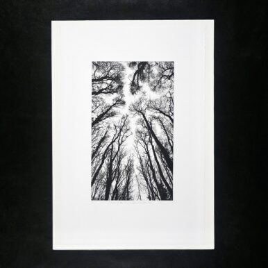 Chorus Of The Trees In Black & White, No II By Clare Grossman