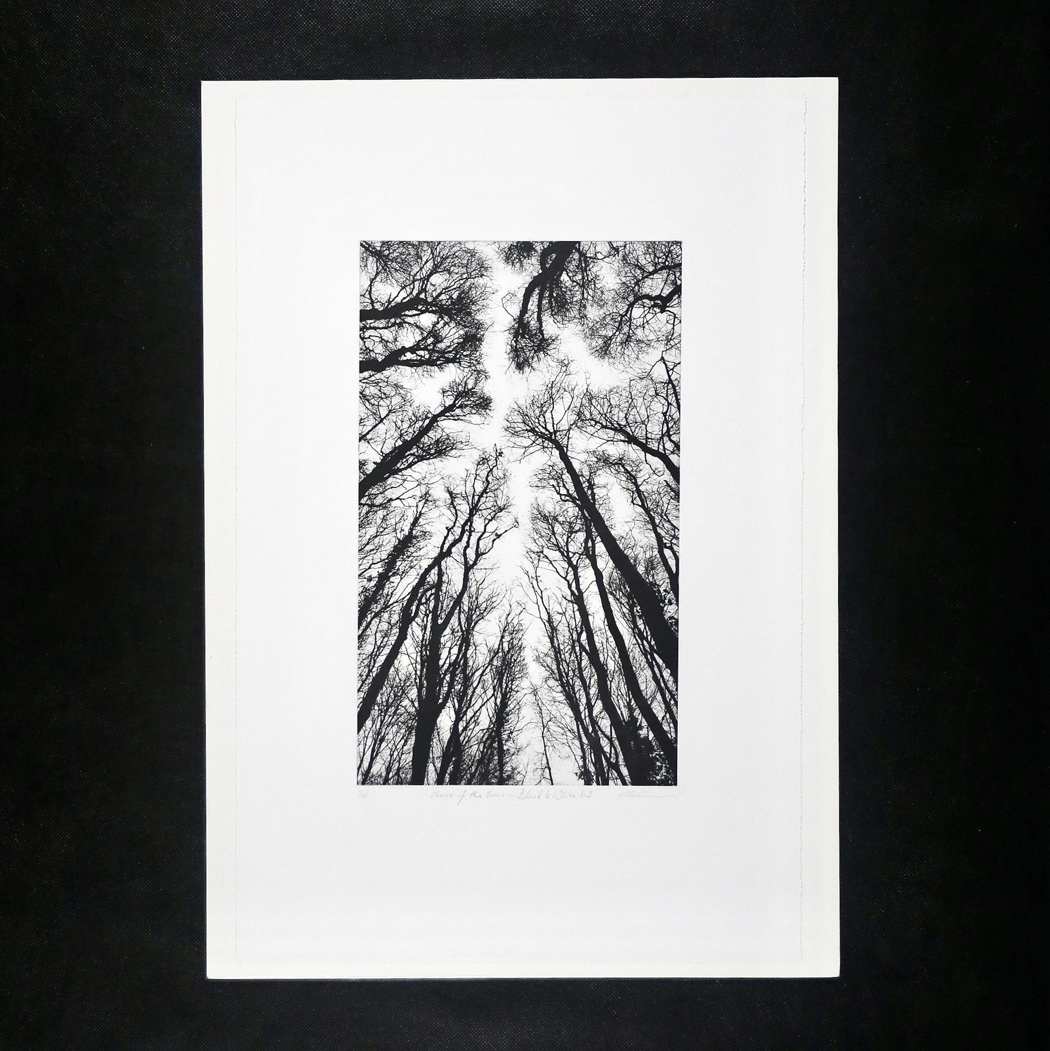 056FAD0E 858D 44A1 8CC9 7BA30D030A84 - Chorus of the Trees in Black & White, No II by Clare Grossman