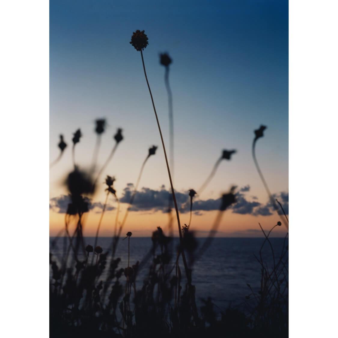 28260EFA A8E8 4323 B437 711057D80F1E - Sea Foliage by Ben Stockley