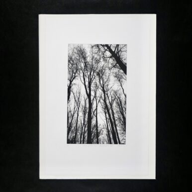 Chorus Of The Trees In Black & White, No III By Clare Grossman