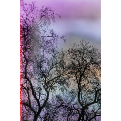 Brockwell Trees IV By Adrian Flower