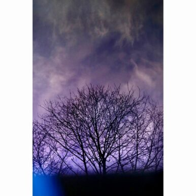 Brockwell Trees III By Adrian Flower