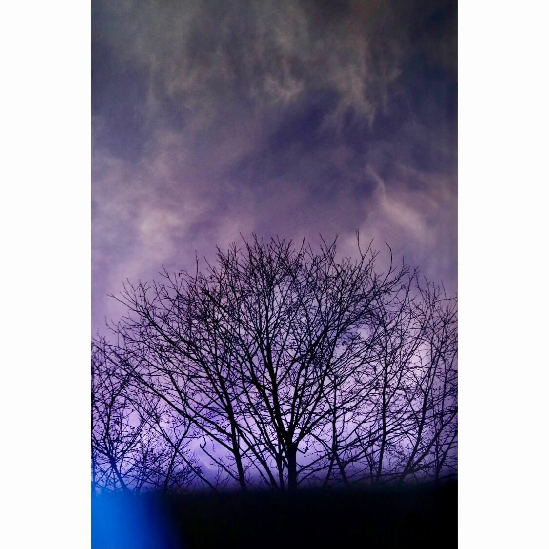 7AD504FC 4B84 46BB BD9E 34CA0A0DB28F - Brockwell Trees III by Adrian Flower