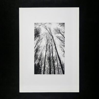 Chorus Of The Trees In Black & White, No I By Clare Grossman
