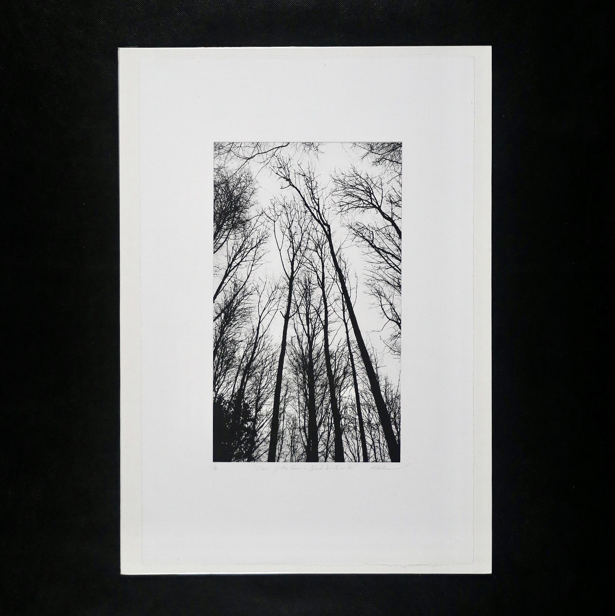E7B87776 07EF 4A78 9938 6F425DF2A9B4 - Chorus of the Trees in Black & White, No I by Clare Grossman