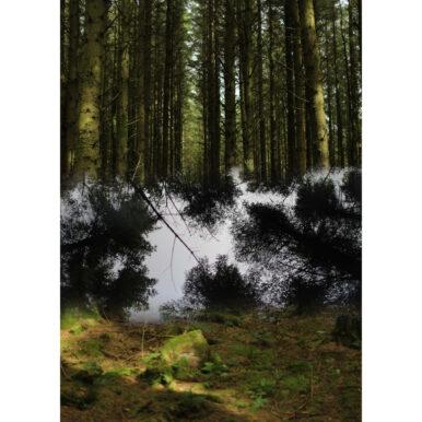 Langholm Trees I