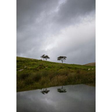 Langholm Trees III