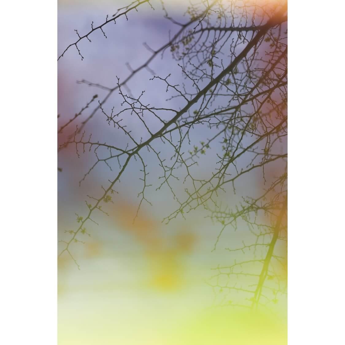 AF682DB5 14F9 4289 AC88 DB9FA53A7709 - Burgess Green Untitled by Adrian Flower