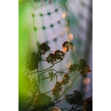 Burgess Fence (Temp) By Adrian Flower