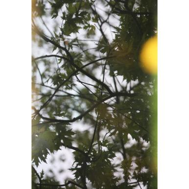 Ruskin Yellow Pop By Adrian Flower