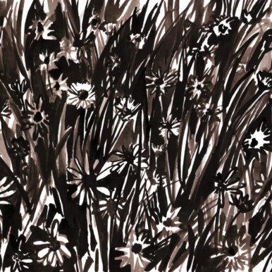 Daisies By Kirsty Jones