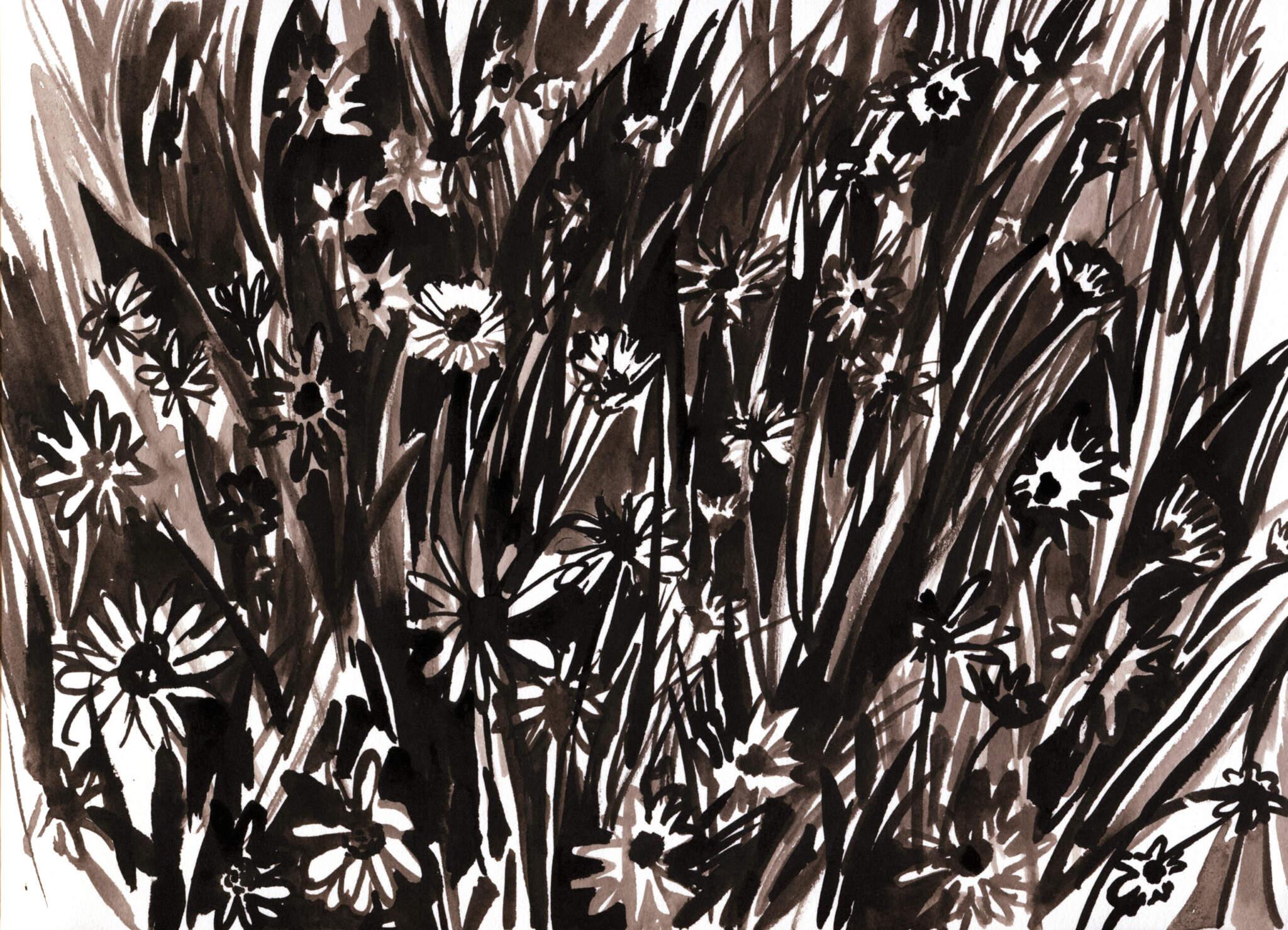 KJP DAISYS 6500 scaled - Daisies by Kirsty Jones